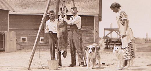 Hog Butchering 1919