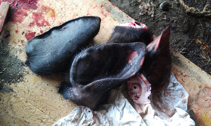 Hog Butchering Pig Ears