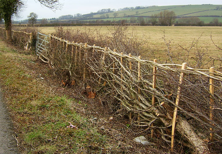 Woven Hedgerow