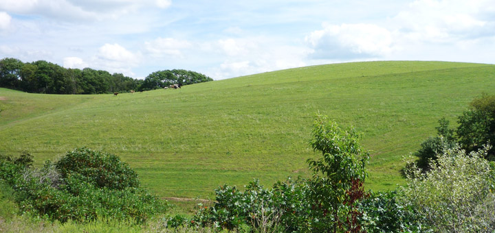 Hagenbuch Homestead Field and Hill