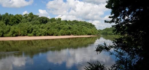 Congaree River Detail