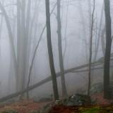 Foggy Mountain Trees