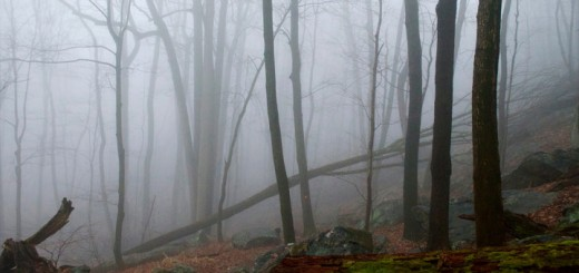 Foggy Mountain Trees