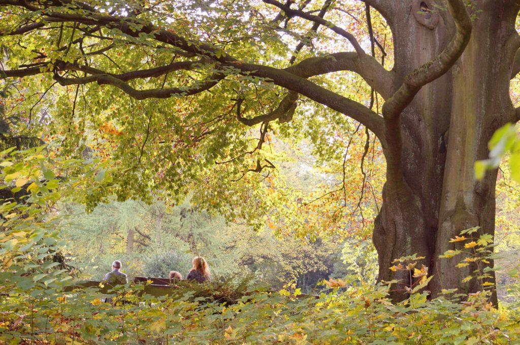 Beech Tree Family