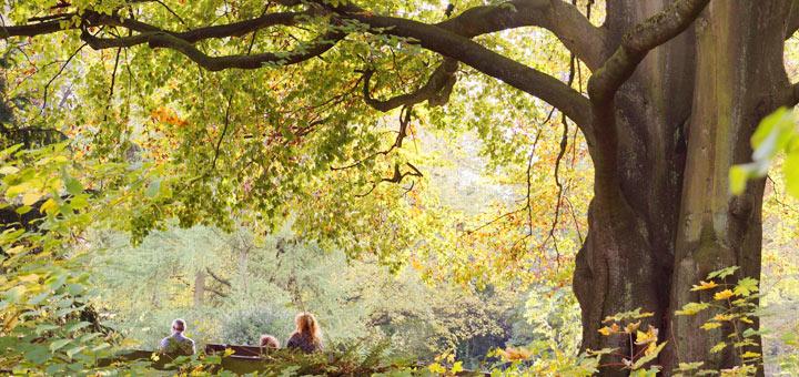 Family Under Beech Tree