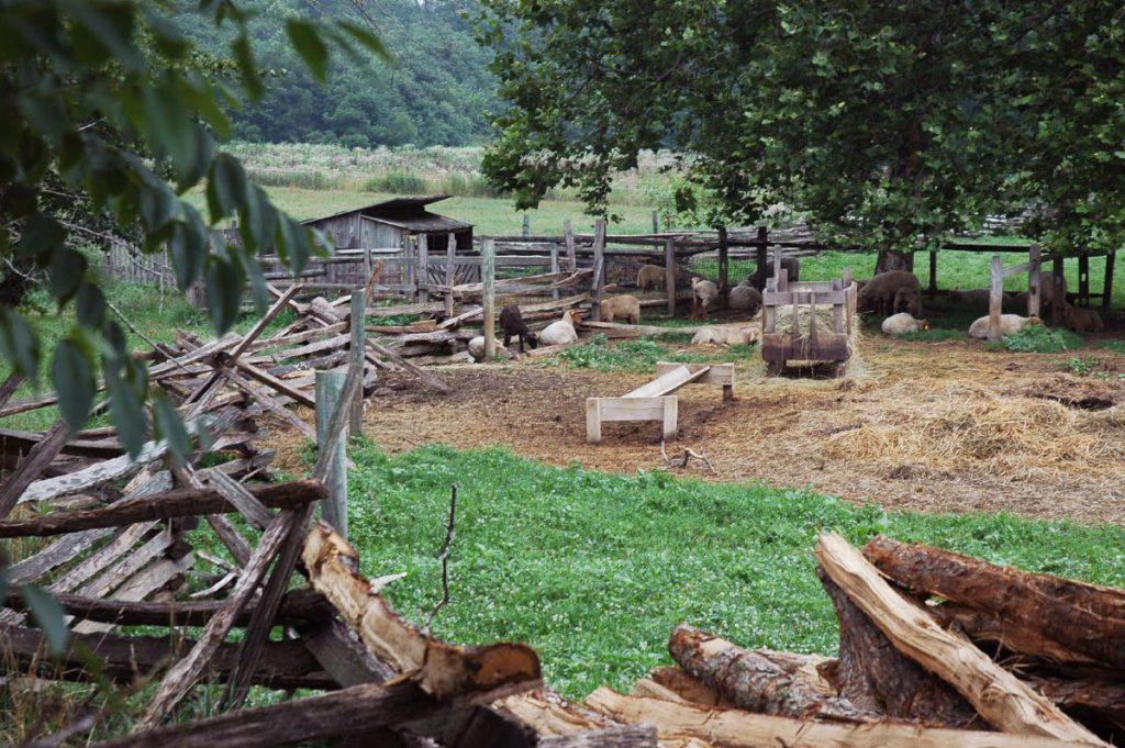 Farm Barnyard Animals
