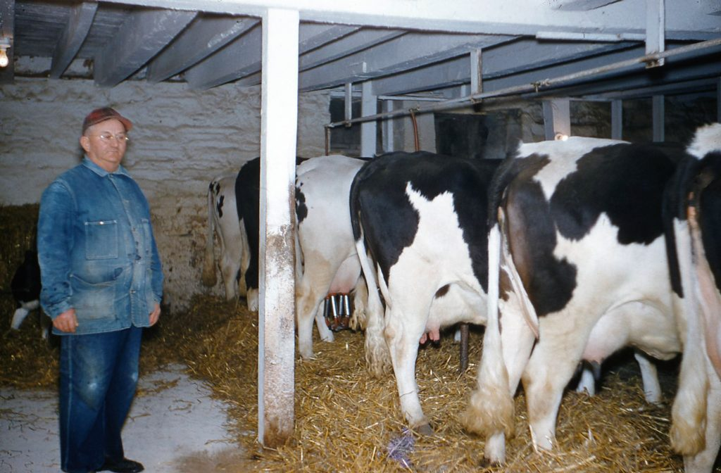 Clarence Hagenbuch with Cows
